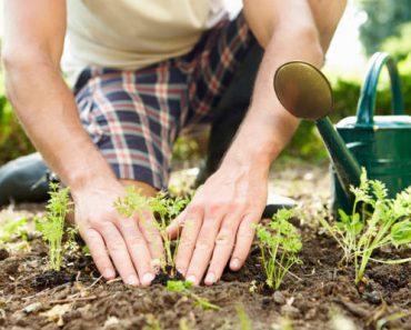 Como cuidar corretamente das plantas
